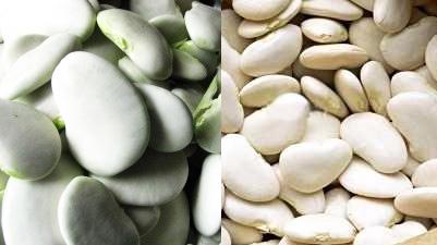 A la izquierda: garrofón tierno recién cosechado. A la derecha: garrofón seco.