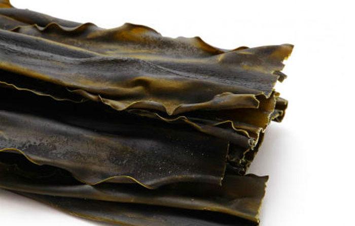 El Alga Kombu, un superalimento con muchas propiedades
