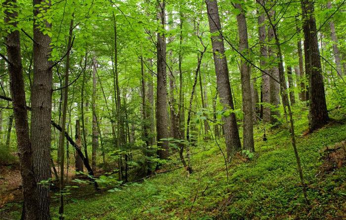 Ejercitemos nuestra vista viendo verde