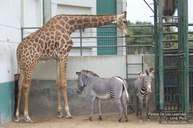 Zoologico Parque de las Leyendas en Lima