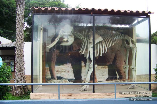 Elefante, esqueleto
