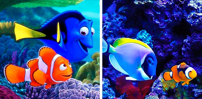 Marlin and Dory in real life