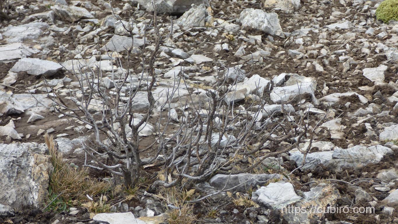 Imágenes de Ticlio Perú