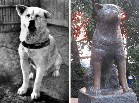 Dia del Perro, la historia de Hachiko