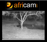 Africam: cámaras de streaming en vivo que te llevarán al corazón de la selva africana.
