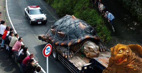 transporte de la tortuga gigante - en realidad es un muñeco de gamera