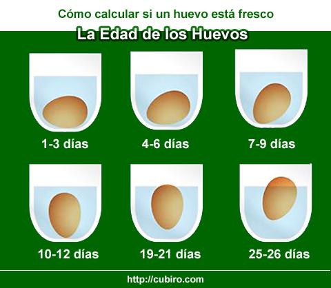 C mo saber si un huevo est fresco la edad de los huevos - Como saber si un coche tiene cargas ...
